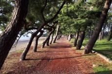 Прогулка в Кобулети
